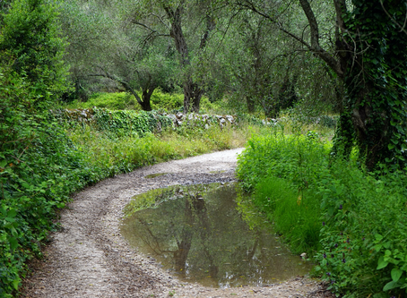 Every Path Has Its Puddle.