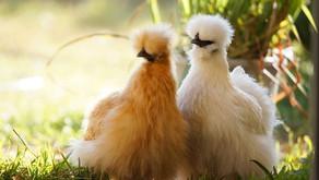 Hitzestress - So schützt Du Deine Tiere im Sommer