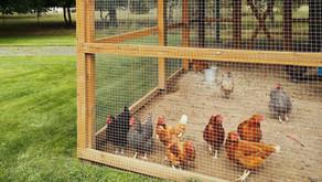 Hühner im Garten: Biosicherheit. Ist das wichtig?