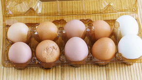 Eier aufbewahren - so geht´s