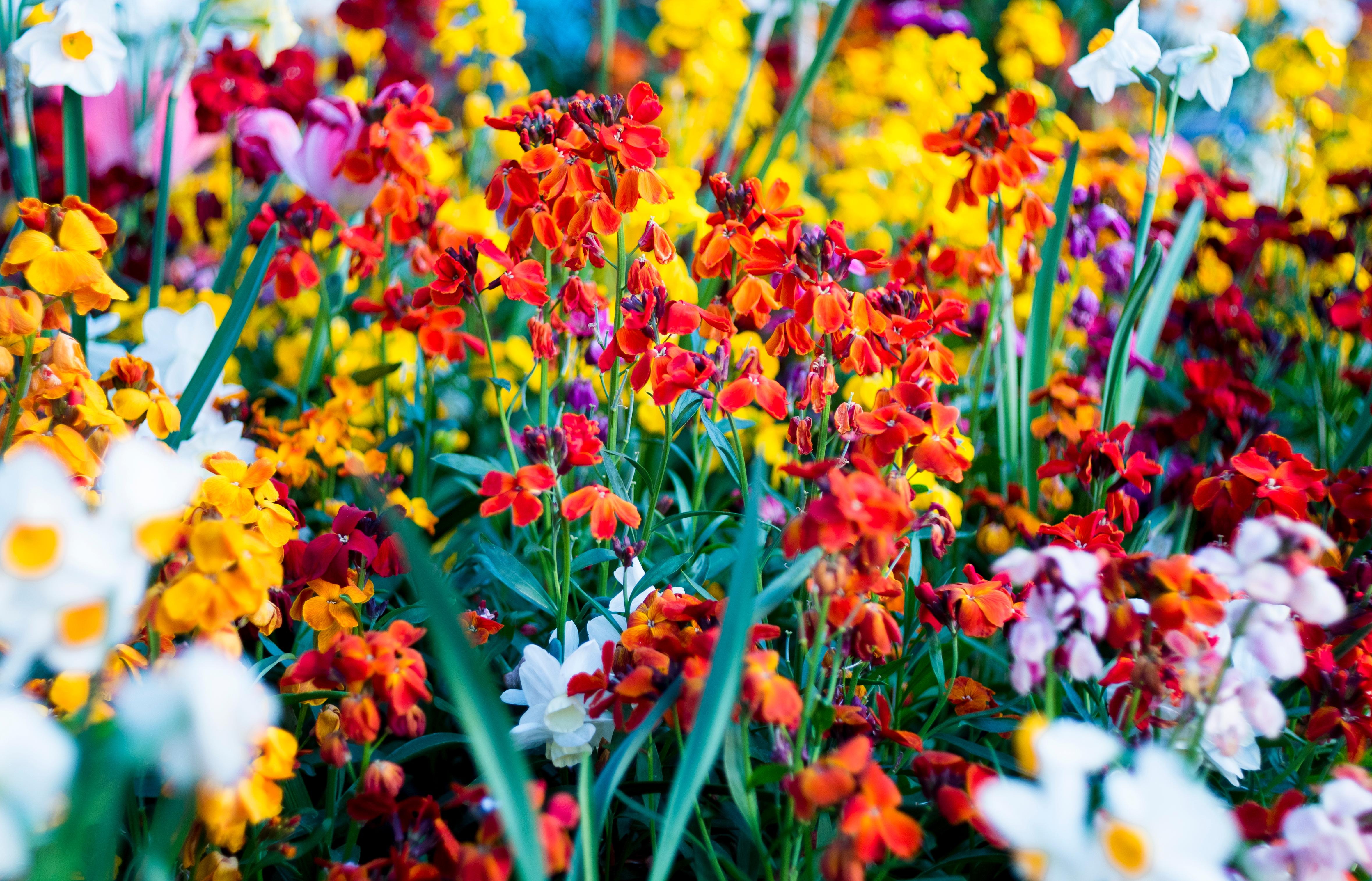 Flower bed in Shrewsbury uk