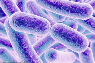 5 Healthy Bacteria Foods