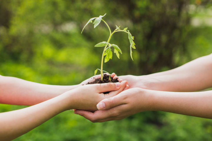 mains-tenant-petite-plante_23-2147807258