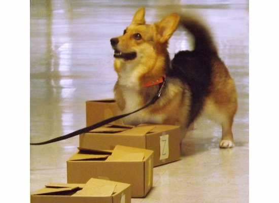 Beginning Nosework @ Lucky Dog