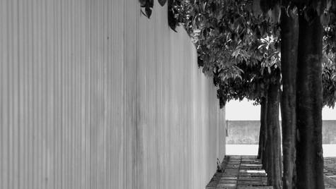 Orange Groves (Black and White) Seville Spain (April 2014)