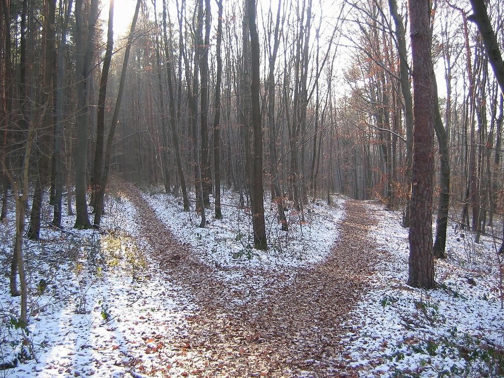 dans la forêt hivernal, le chemin se sépare en deux