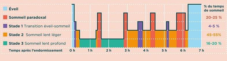 graphique représentant les cycles du sommeil