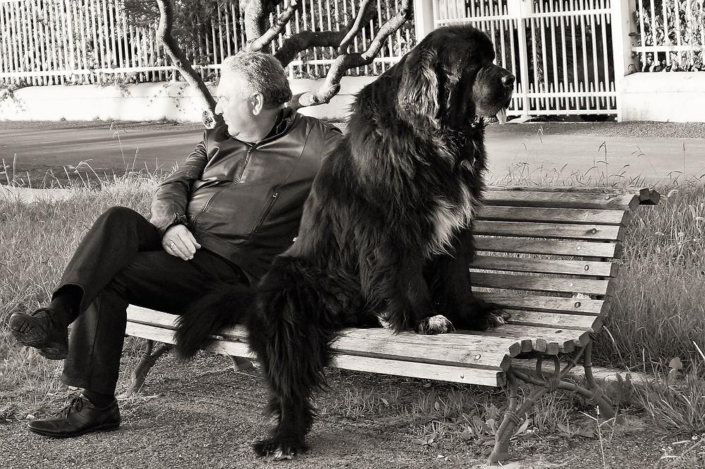 un  homme et son chien sur un banc