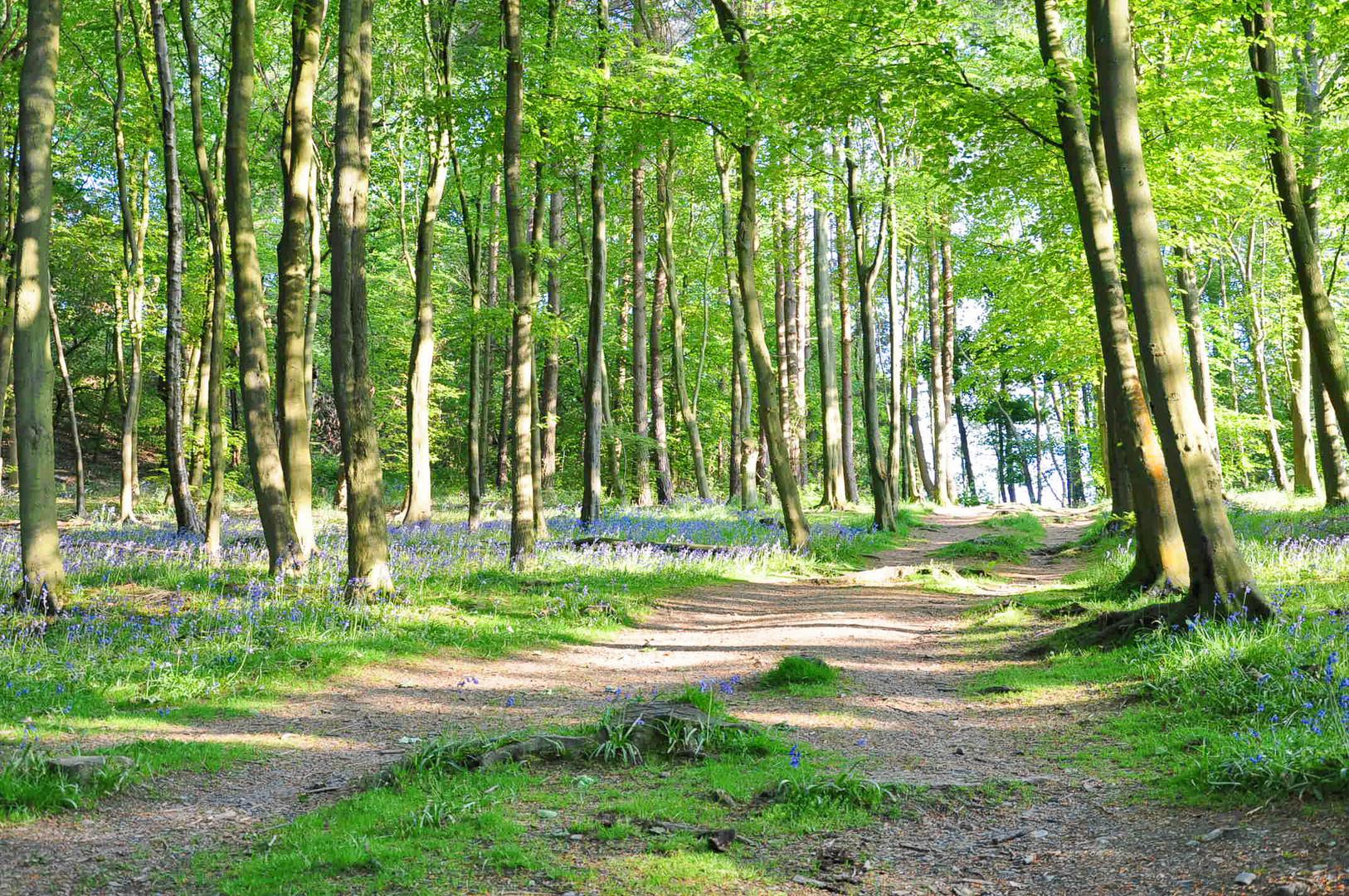 8 Bluebell wood.jpg