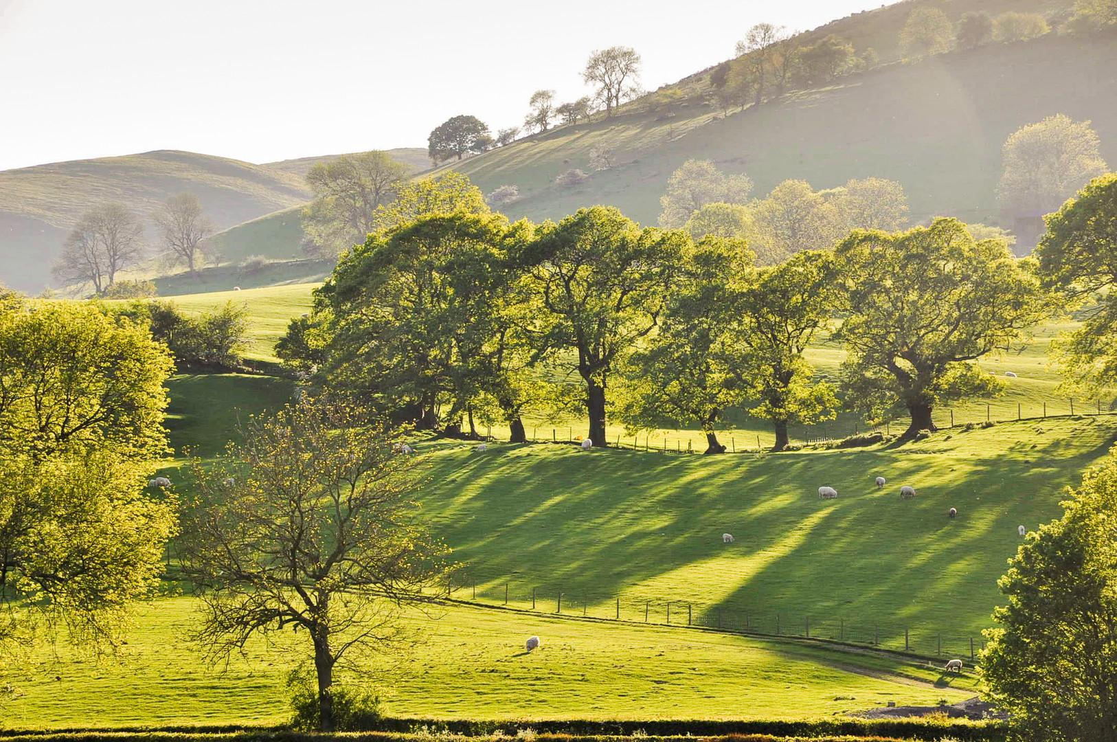 2 Hillside view.jpg