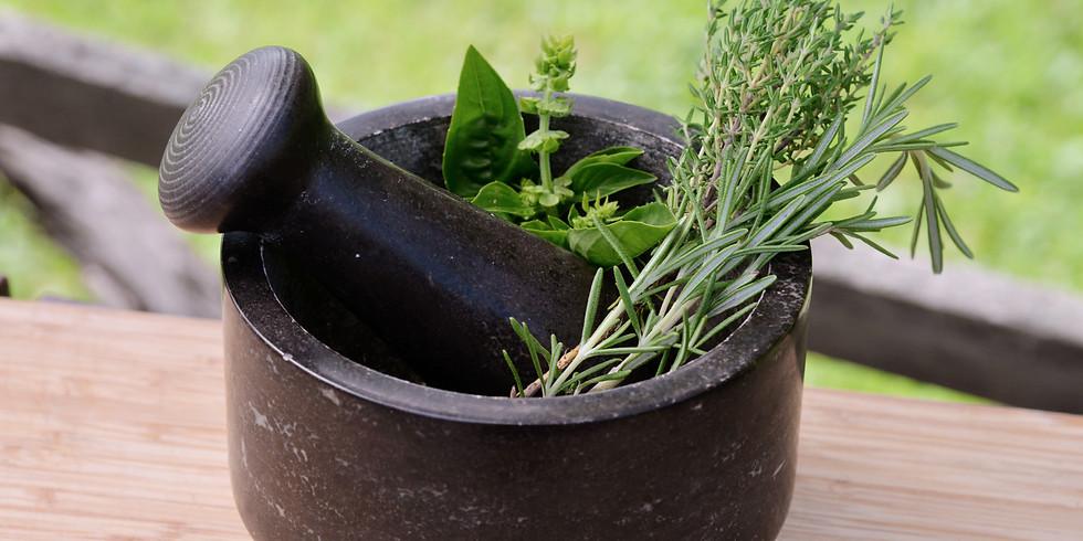 Hildegard´s Pflanzen und Gewürze