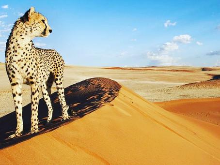 Back to Namibia