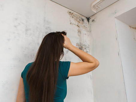 I Have Mold in my Home, Now What?