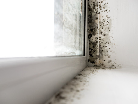 How Do I Know if I Have Mold?
