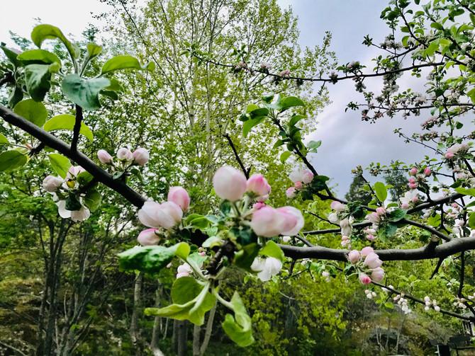 23 juni, onsd - Kräftans fullmåne. Ljusets och blomningenshögtid! Kl. 14.00