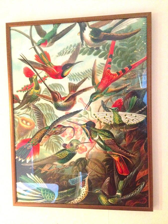 Attraktionslagen och kolibris