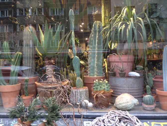 Kaktusar överallt