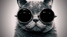 CAT-инструментарий переводчика