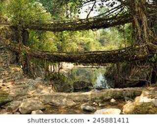 Voxel City on a Bridge | Root Bridges