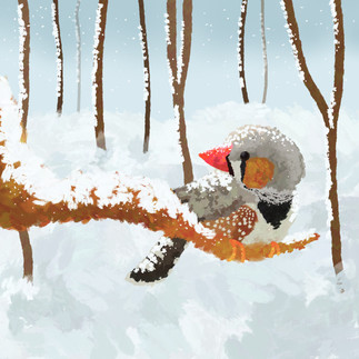 ZEBRA FINCH IN SNOW