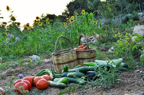 Olive farm