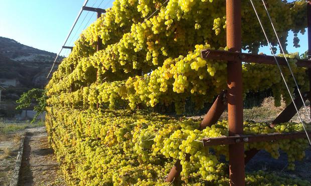 Wine Walkers Crete