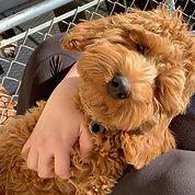 Meet my new teddy bear, his name is Walt