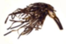 Seaweed Suppliers
