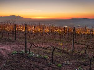 Vineyards sunset