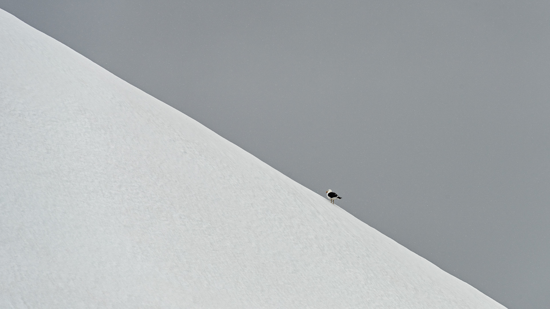 Asbtract White Snow line with Bird