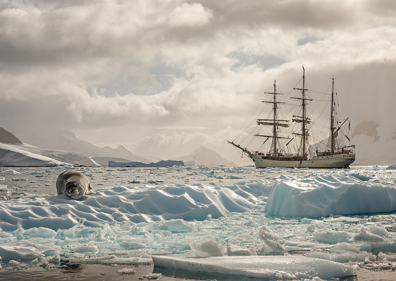 Bark Europa and leopard seal