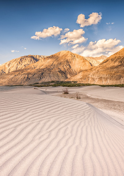 Sand dunes, Nubra valley