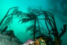 Kelp Enviromental Harvesting