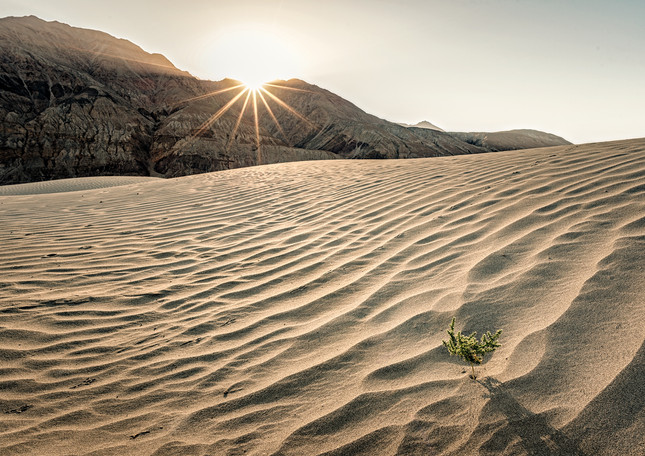 Dune Sunrise, Nubra Valley