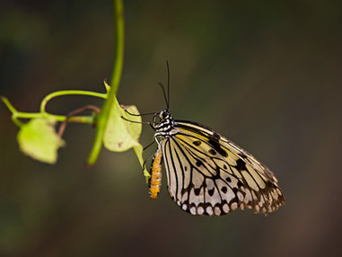 Butterfly Word, Cape Town