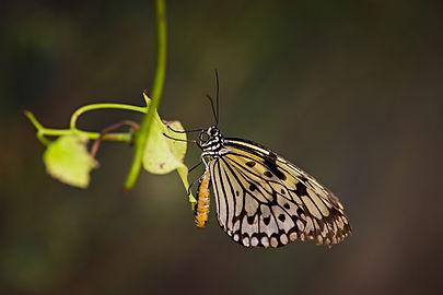 butterfly-world.jpg