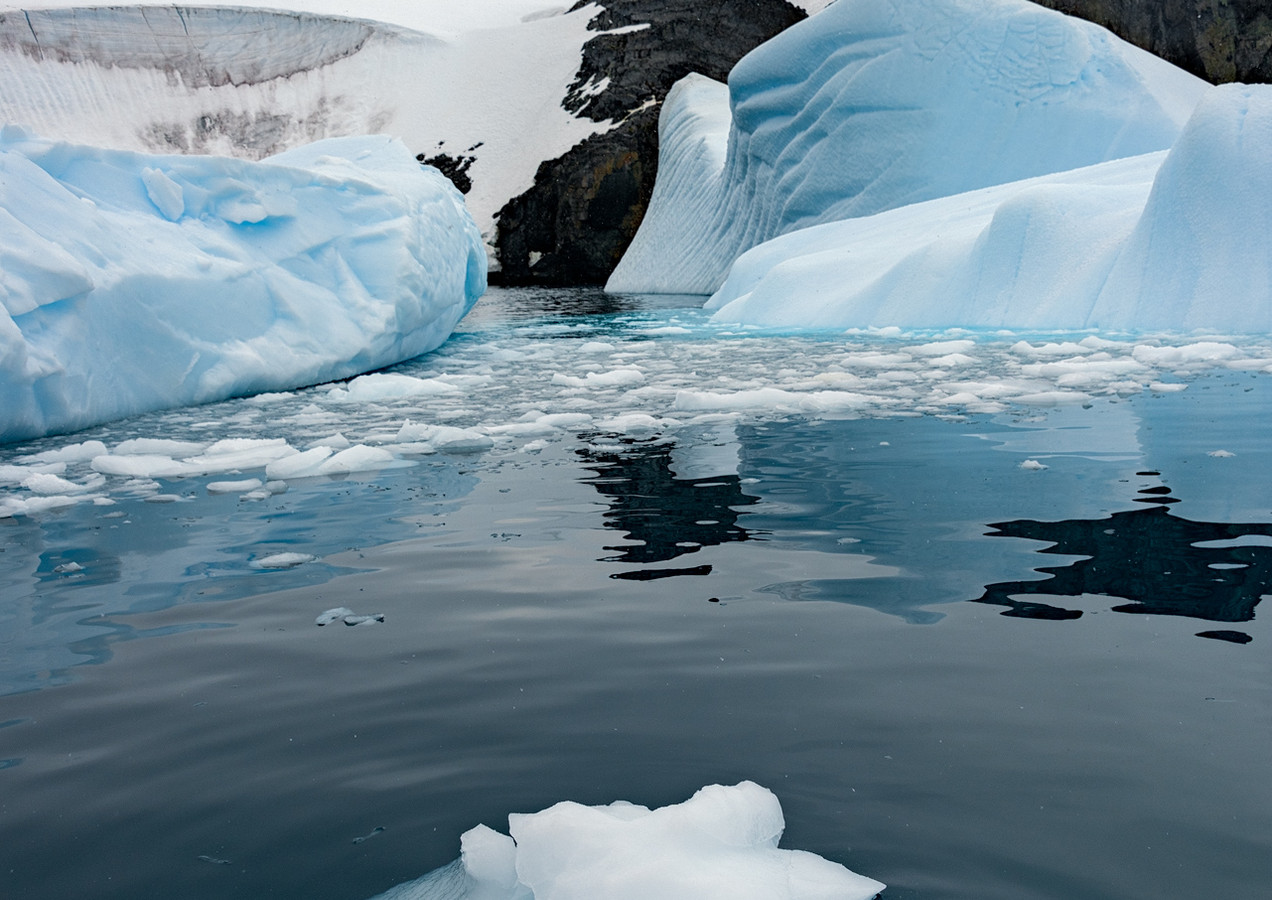 Ice floe and Icebergs, Trinity Island