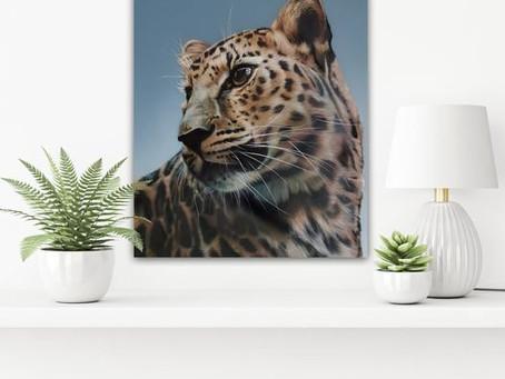 He is back! Andy Caddick's new Amur Leopard lands.