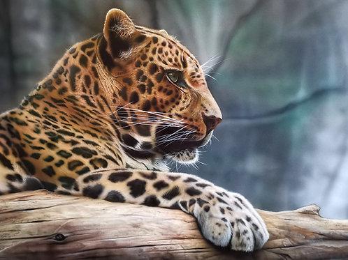 "Andy Caddick -""Leopard"" - Original"