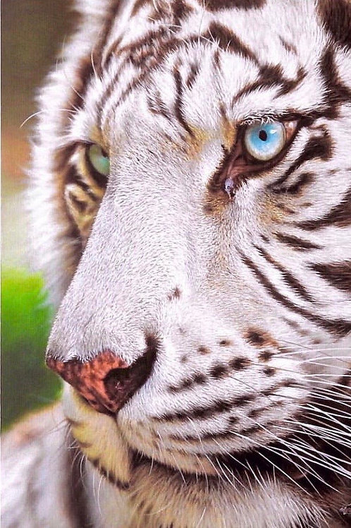 Nick Sider - Siberian Tiger - Limited Edition Fine Art canvas Atelier Edition
