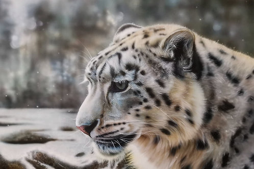 "Andy Caddick - ""Snow leopard."" - Original"