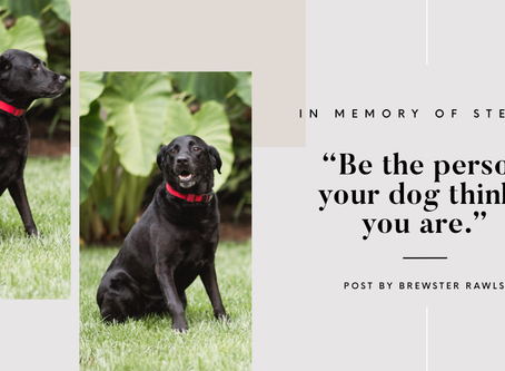 Lawyer Life Lessons from a Labrador Retriever