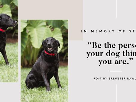 Lawyer Life Lessons from a Labrador Retriever