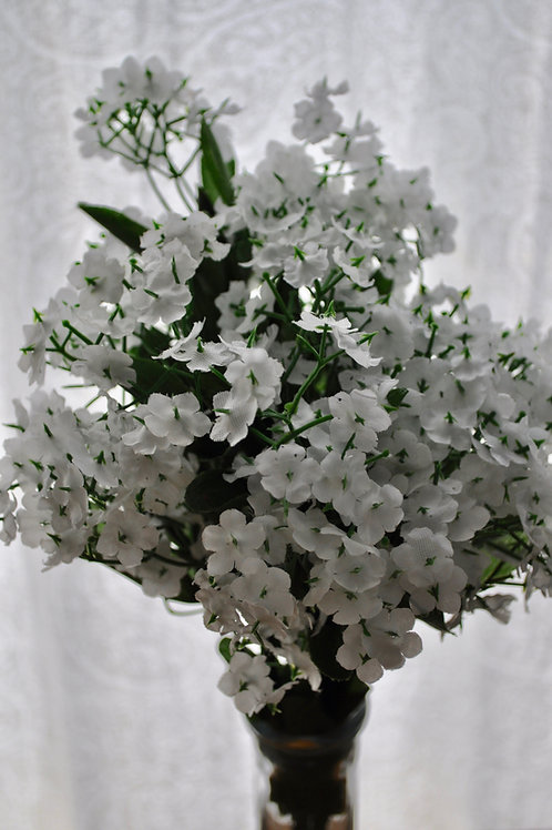 White Heliotrope Flowers