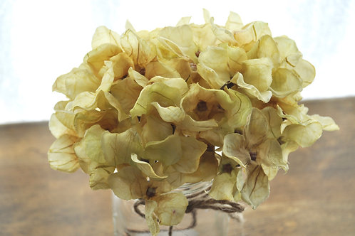Ivory Hydrangeas