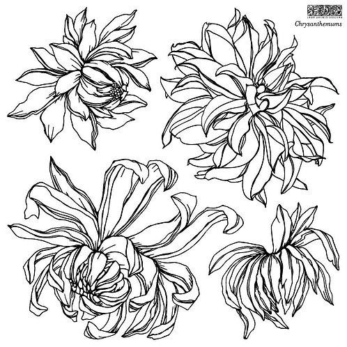 IOD Chrysanthemums Double Décor Stamp™