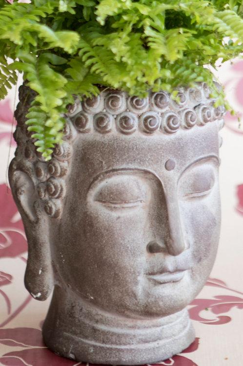 Buddha Plant Holder