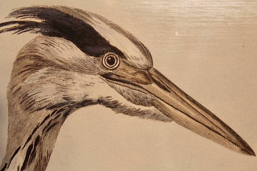 'The Heron' Hand Coloured Etching