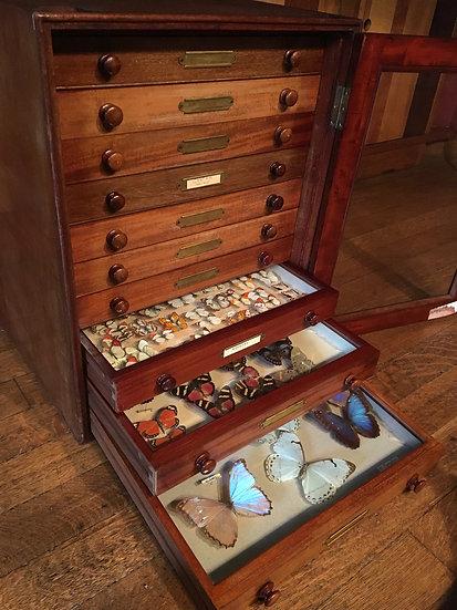 Victorian Mahogany Entomology Butterfly Cabinet