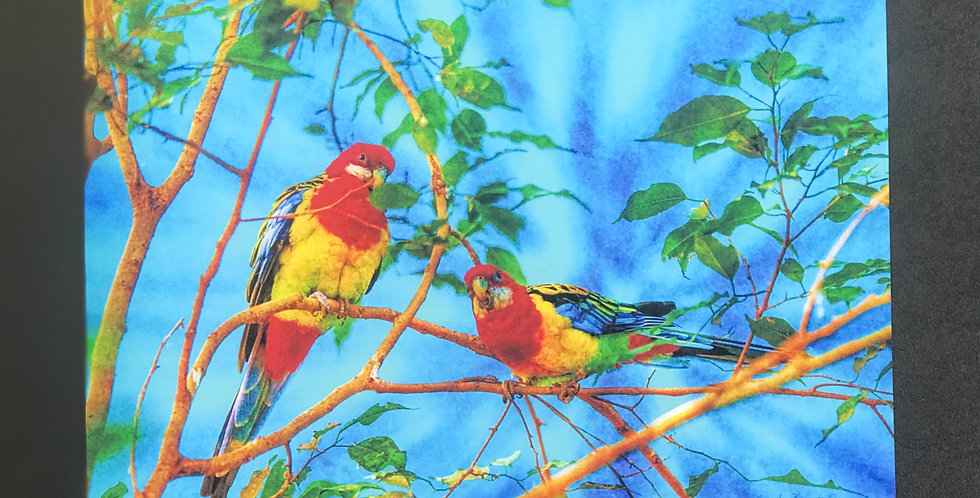 "Card, 8.5"" x 5.5"" -2 Of A Kind. Eastern Rosella Parrots. Blank inside"